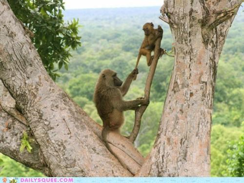 acting like animals baboon baboons child climbing energy lecture stopping strict warning - 5386559232