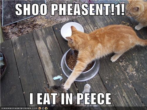 caption captioned cat Cats dispute eat eating fighting go away mine nomming noms peace peasant shoo tabby - 5386781696