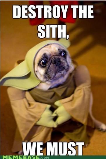 animemes,costume,dogs,sith,yo dawg,yoda,yodog