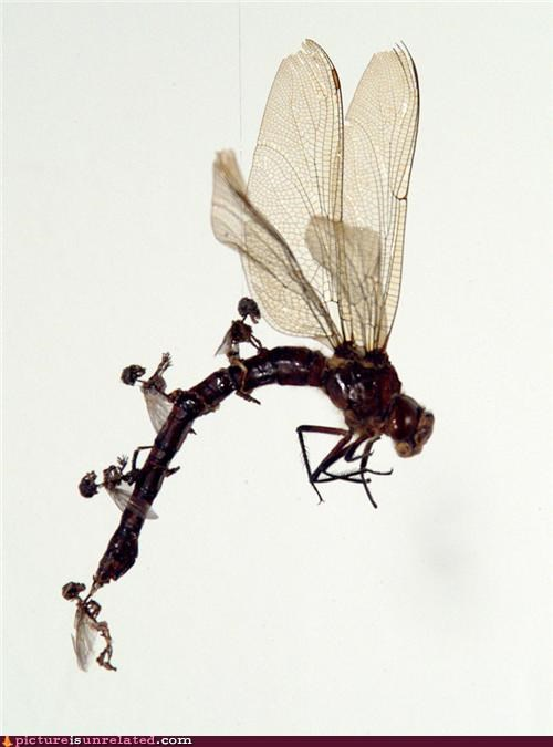 dragon dragonfly insect riding skeleton wtf