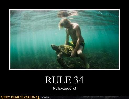 Funny meme about Rule 34 of a man with a turtle and a caption that say's 'no exceptions'