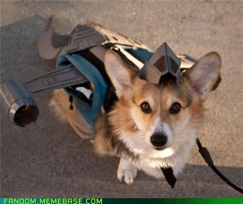 corgi cosplay cute Firefly pet serenity - 5387151360
