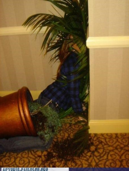 drunk,face first,get it,palm,Palm Tree,passed out,pun,puntastic,wall