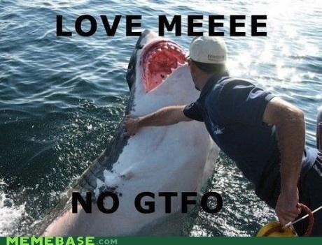 Chuck Testa gtfo love Memes sharks - 5387450368