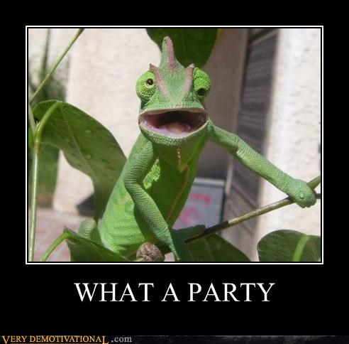 animals,chameleon,drunk,hilarious,Party