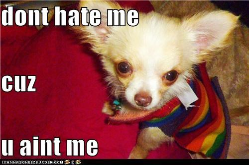 adorbz beautiful chihuahua clothes cute cutie dont-hate-me-because-im-beautiful dont-hate-me-cuz-you-aint-me sweater - 5388853760