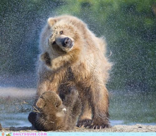 acting like animals baby mother bath bear built in cub grizzly bear lolwut shaking