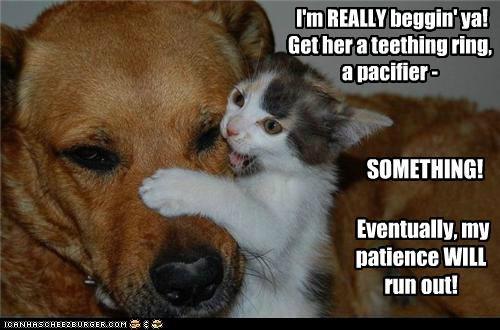 bite biting cat chewing help kitten mixed breed pacifier patience teeth - 5389111296