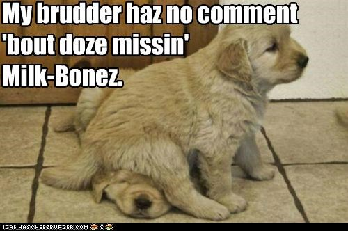 My brudder haz no comment 'bout doze missin' Milk-Bonez.