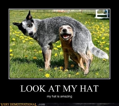 animals dogs hat hilarious - 5389777152