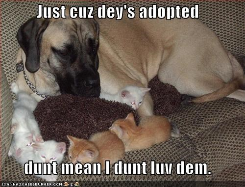 adoption couch love - 539029760