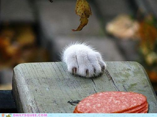 acting like animals cat claws do want feeling meat noms paw periscope pun
