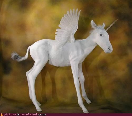 my little pony pony unicorn wtf - 5390504192