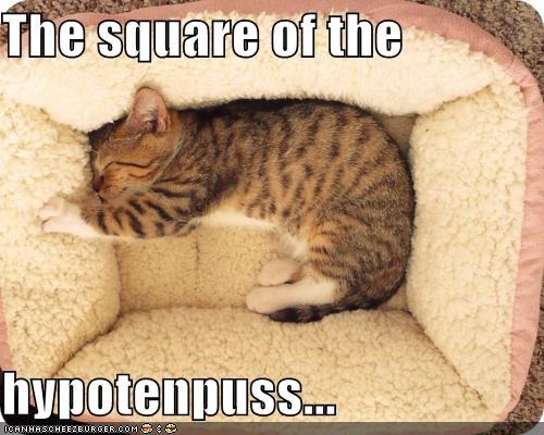 asleep,cat,cute,hypotenuse,I Can Has Cheezburger,math,mathematics,sleeping,smart,Square