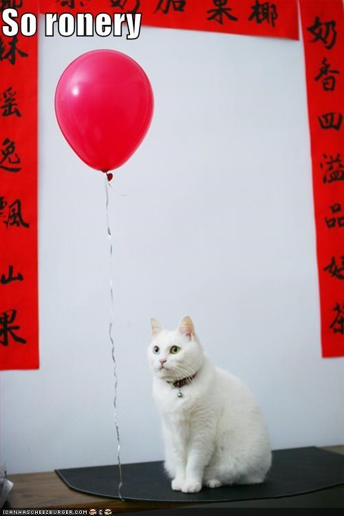 alone awww balloon cat depressed I Can Has Cheezburger lonely ronery Sad - 5390787584