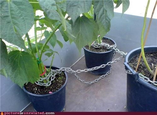 chains,gardening,plants,wtf