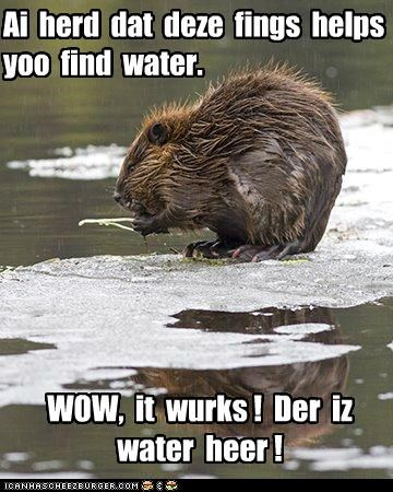 beaver,caption,captioned,dowsing rod,find,found,water,works