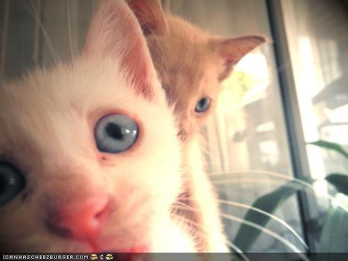 closeups,cyoot kitteh of teh day,eyes,photobomb,two cats