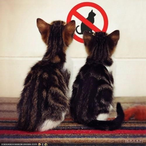 cyoot kitteh of teh day discrimination no no cats signs two cats - 5391468544