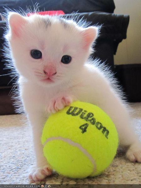 balls,cyoot kitteh of teh day,sports,tennis,tennis ball