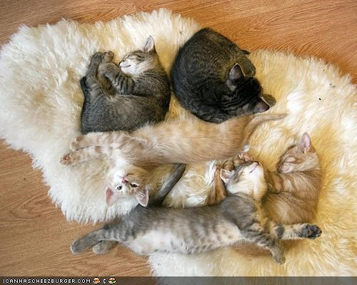 carpet cyoot kitteh of teh day fur lots of cats pile rug sleeping warm - 5391485184