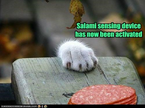 activated,caption,captioned,cat,device,do want,Hall of Fame,noms,now,paw,pawing,reaching,salami,sensing