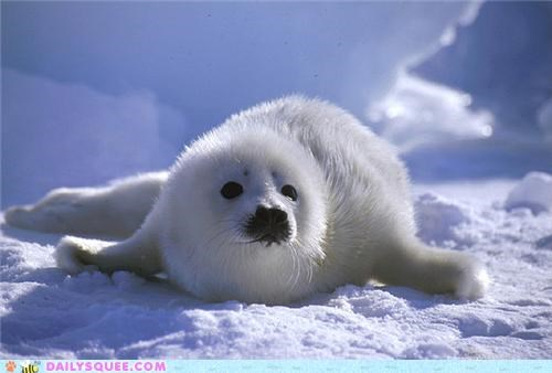 adorable baby explanations harp seal lolwut pup rain ramble seal slick squee spree tiny wet