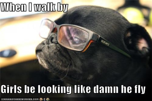 fly girls glasses good looking handsome hey-good-looking pug sexy women - 5392556032