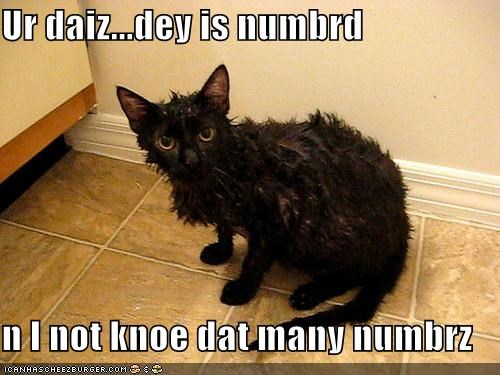 black lolcats wet - 539269376