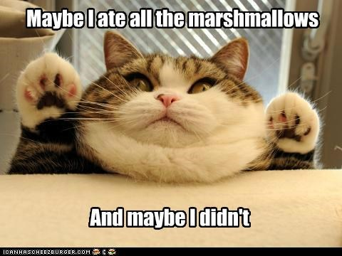 caption captioned cat denial fat Hall of Fame ignorance lying maru maybe maybe not - 5393637888