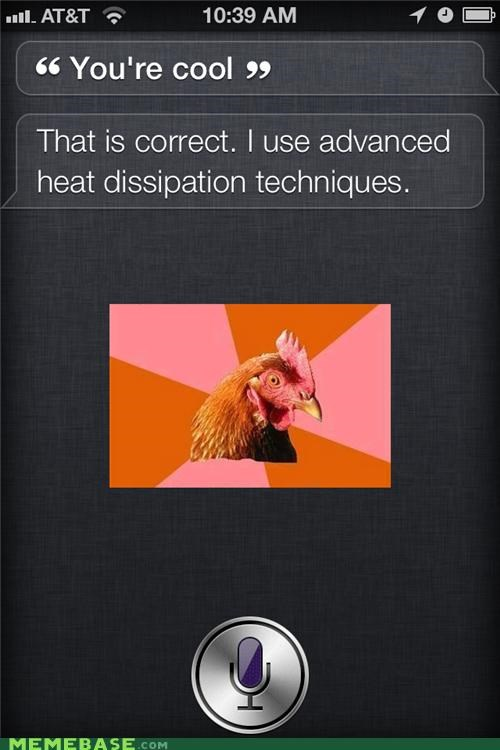 anti joke chicken,chicken,cool,Heat,phonestuff,siri