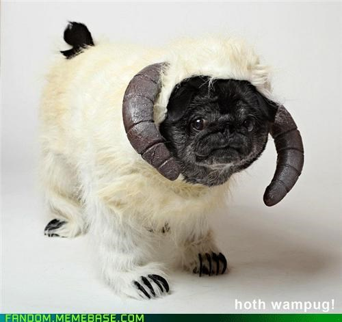 cute dogs It Came From the Interwebz pug star wars wampa - 5394230272
