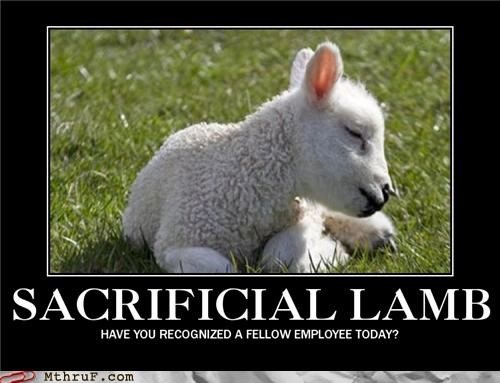 demotivational,lambs,recognizing your fellow employee,sacrificial lamb