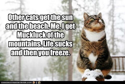 beach caption captioned cat cold do not want freeze get life mountains other snow sucks sun
