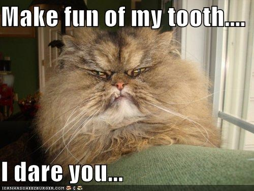 caption captioned cat dare fun grumpy Hall of Fame make mocking persian threat tooth underbite - 5394411264