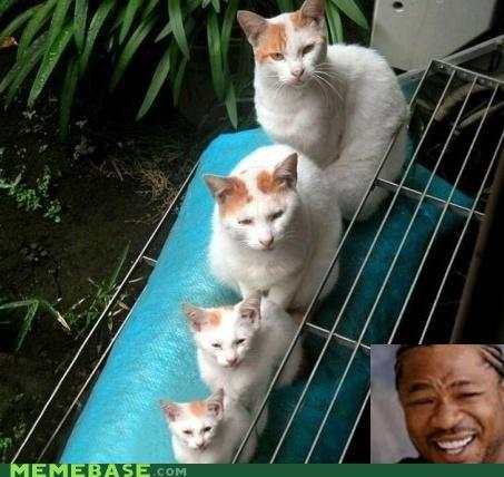 animals animemes Cats cute dogs get it yo dawg - 5394636288