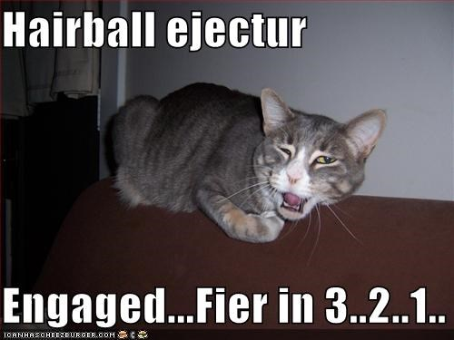 coughing grey hairball lolcats - 539474176