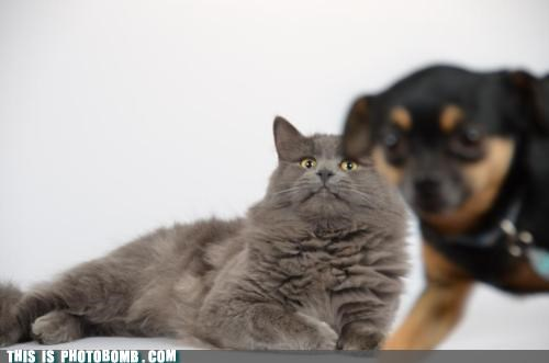 animal Animal Bomb best of week cat dogs no me gusta not happy scary - 5394981120
