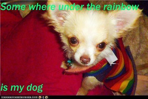 Cheezburger Image 5395127552