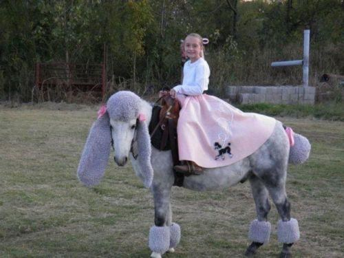 Poodle Horse,PWWTKT,The 1 Percent