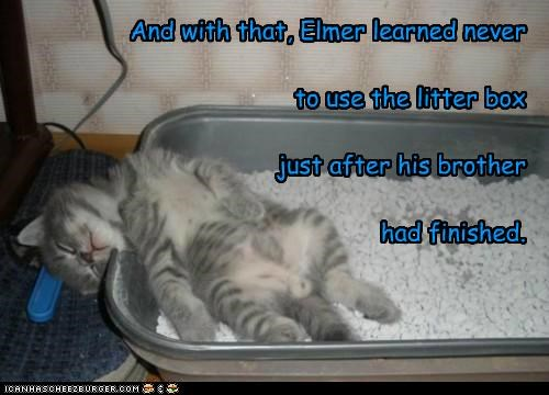 And with that, Elmer learned never to use the litter box just after his brother had finished.