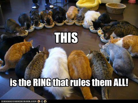 all best of the week caption captioned cat Cats circle Hall of Fame Lord of the Rings nomming noms one ring quote ring rules this - 5395490816
