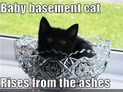 ashes,ashtray,baby,basement cat,caption,captioned,cat,kitten,pun,rises,sitting