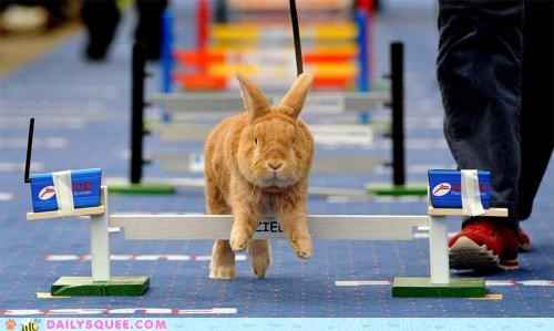 acting like animals bunny course figurative happy bunday hurdle hurdles jumping literal obstacle rabbit - 5395656192