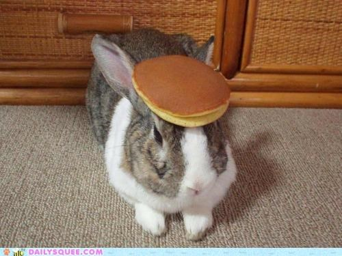 acting like animals bunny context difference frying pan happy bunday name rabbit spatula - 5395681024