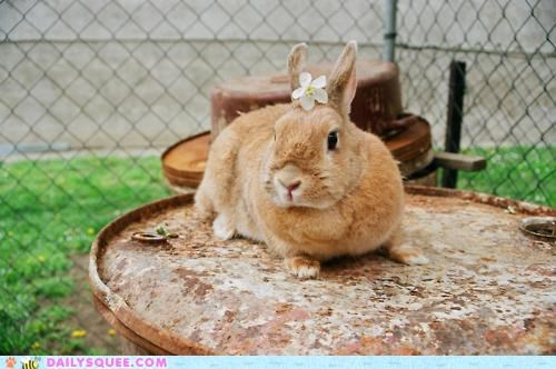 bunny,combination,combinations,comparison,Flower,happy bunday,perfect,rabbit