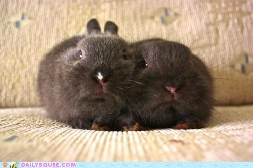 bunnies bunny disgruntled do not want grumpy happy bunday morning rabbit rabbits tiny waking up - 5395754752