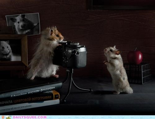 acting like animals,camera,confused,hamster,hamsters,no idea,photo shoot,photography,posing