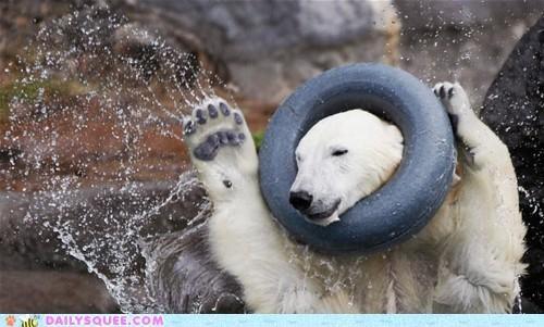 acting like animals bear confused imitation lies lying mane neck playing polar bear stuck tired - 5396242432