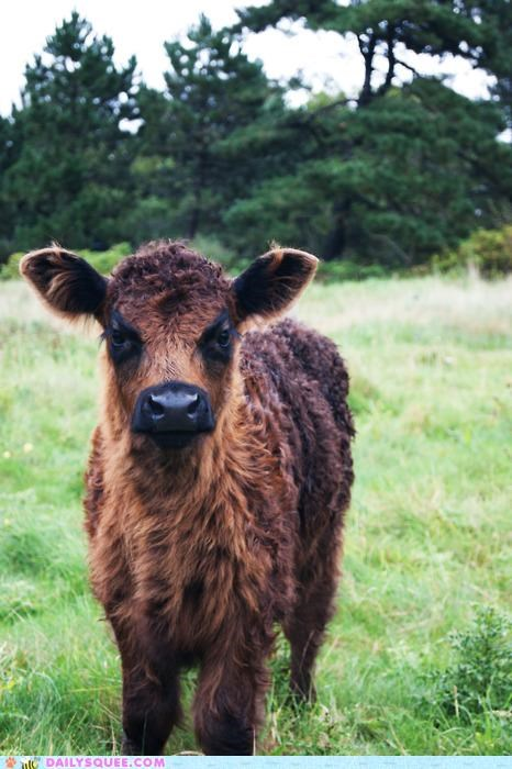 baby calf cheer up cow frown frowning grumpy idiom lolwut suggestion - 5396388608